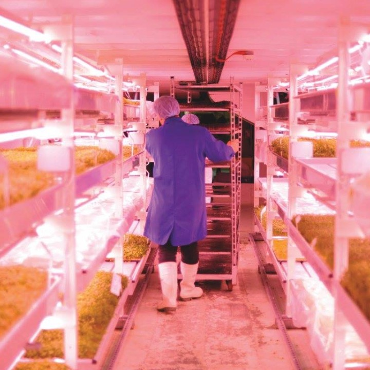 London Is Growing Salads In An Underground Bomb Shelter