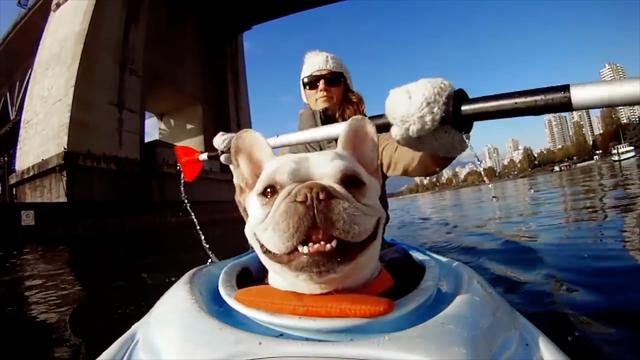 Daily Escape: Dog goes kayaking in Vancouver, Canada