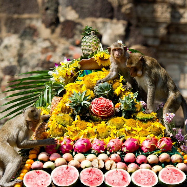 You too can enjoy this lavish Thai buffet if you are a monkey