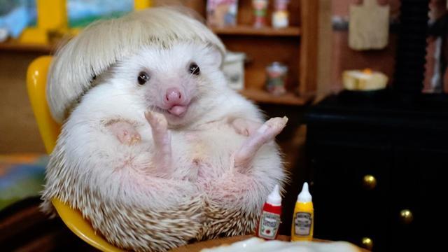 This Celebrity Hedgehog Lived Like A Fashionista