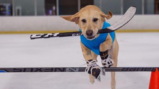 Dog Nearly Euthanized Becomes Ice Skater