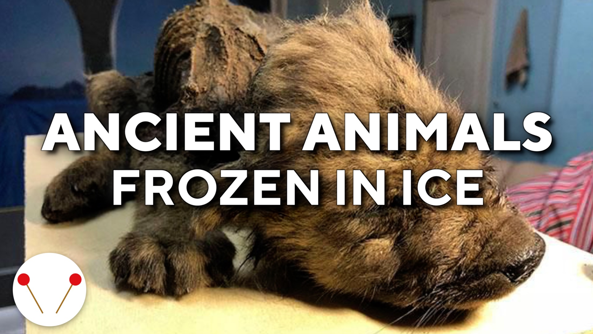 6 Ancient Animals Found Frozen In Ice