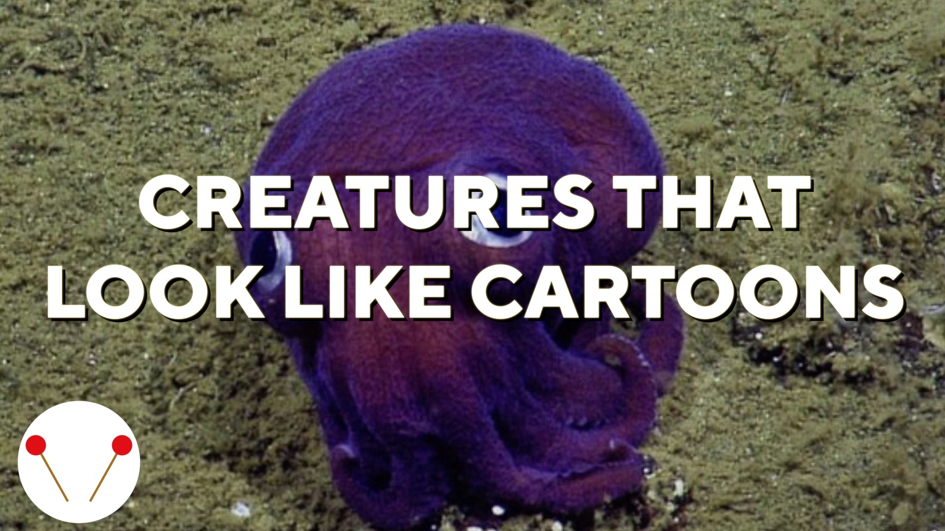 5 Underwater Creatures That Look Like Cartoons