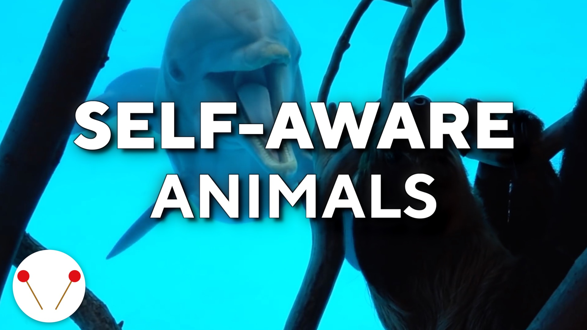 6 Animals That Show Signs Of Being Self-Aware