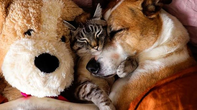 Rescued Dog And Cat Become Best Friends