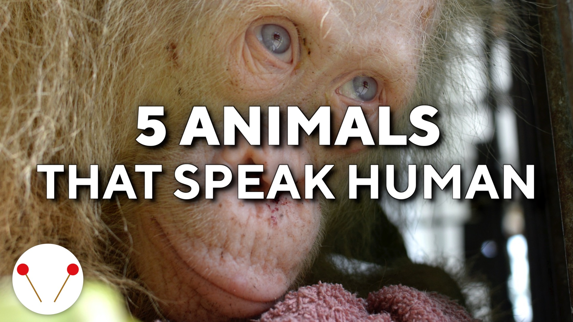 5 Animals That Speak Human