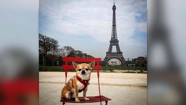 Meet The World's Most Well-Traveled Dog