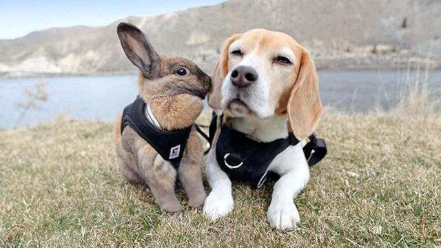 Beagle And Bunny Strike Unlikely Friendship