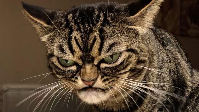 Meet Kitzia - The World's Grumpiest Cat