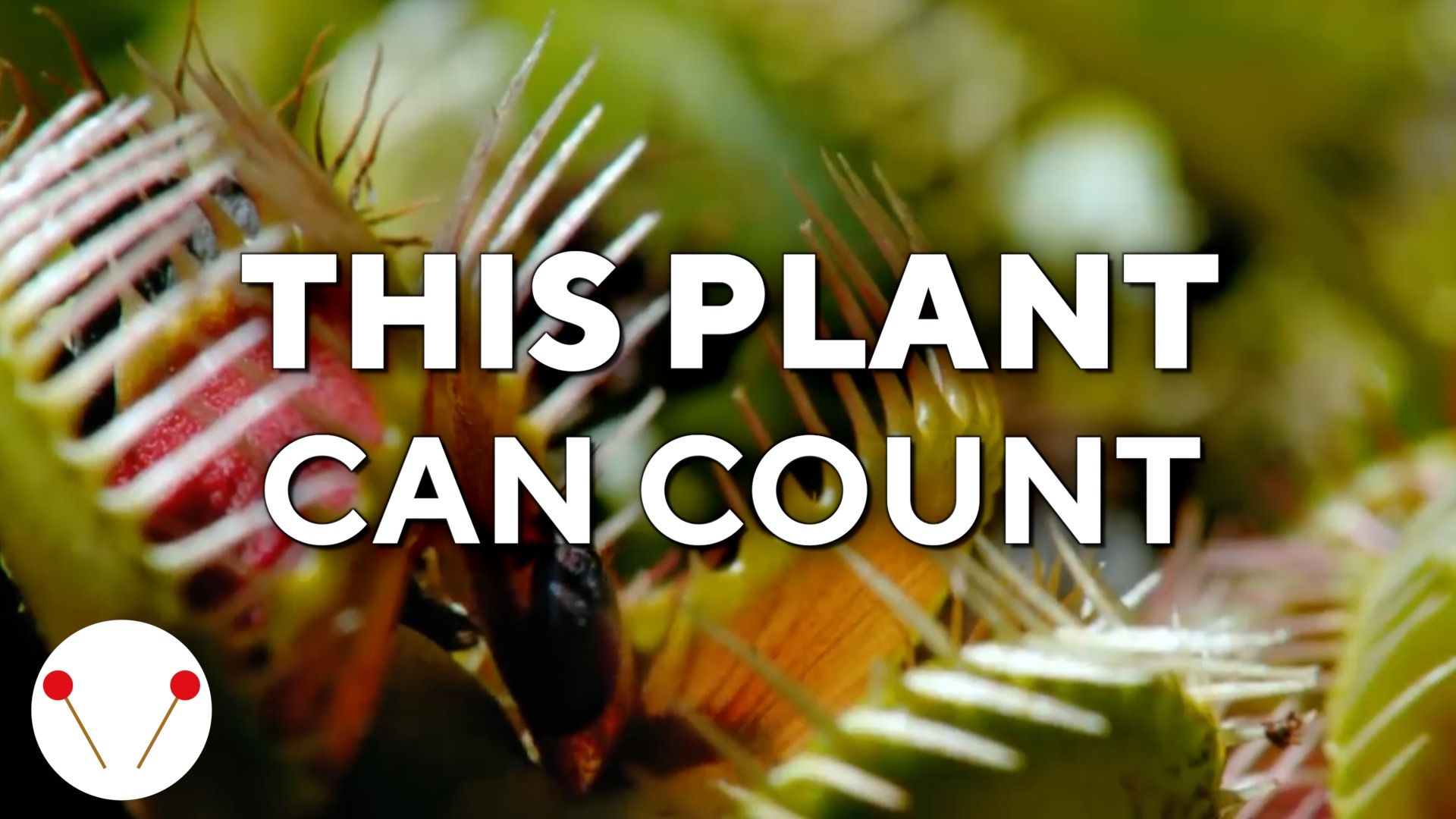 The plant that can count