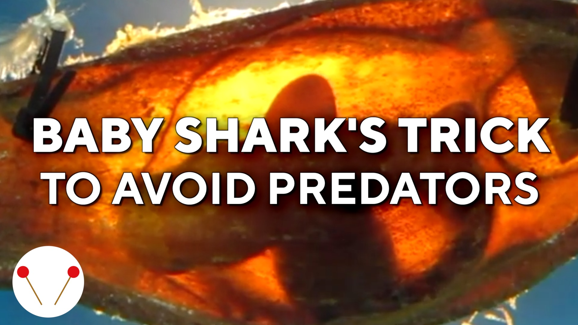 Baby shark in egg case gets quiet amid predators
