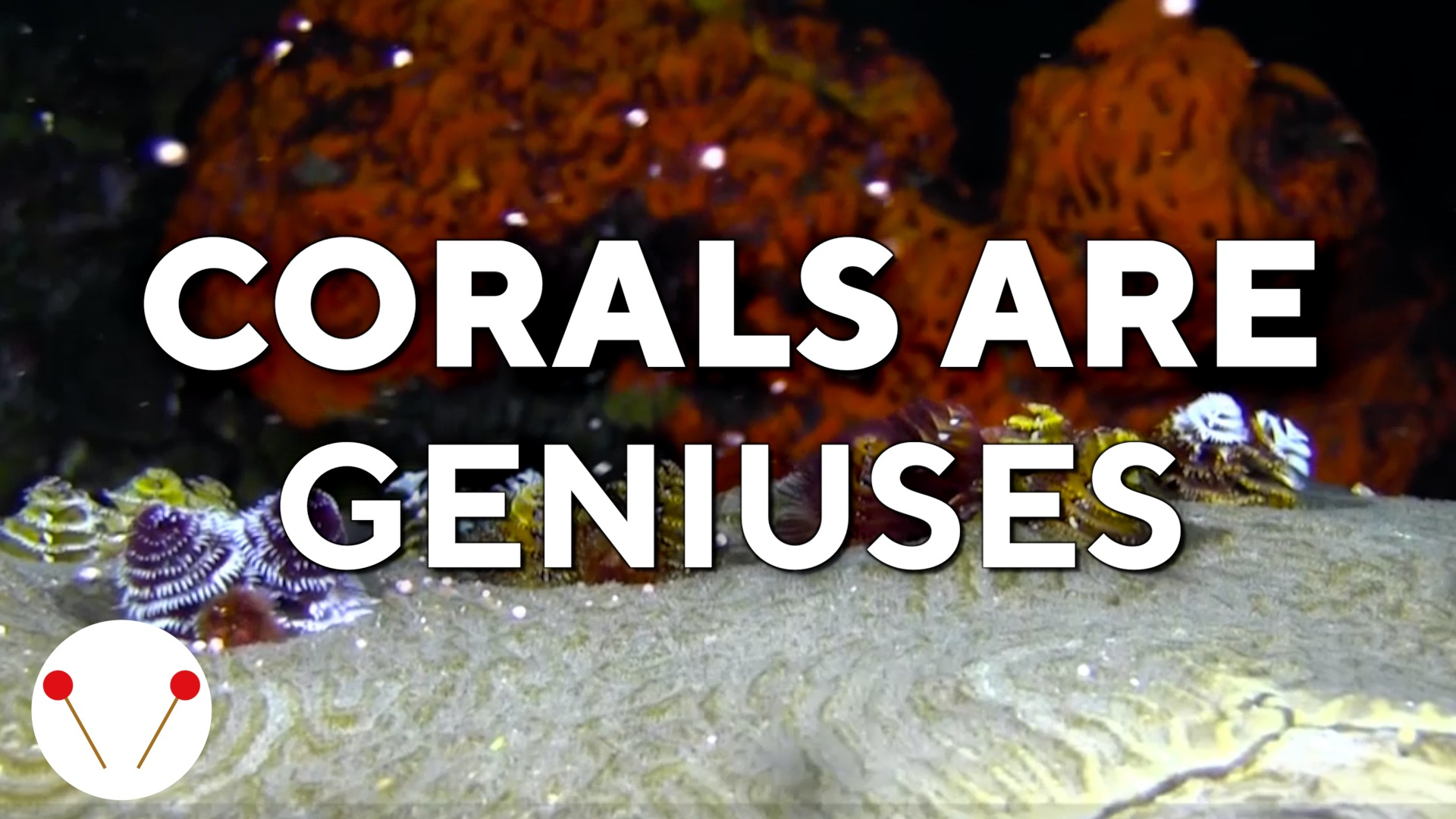 Corals are geniuses