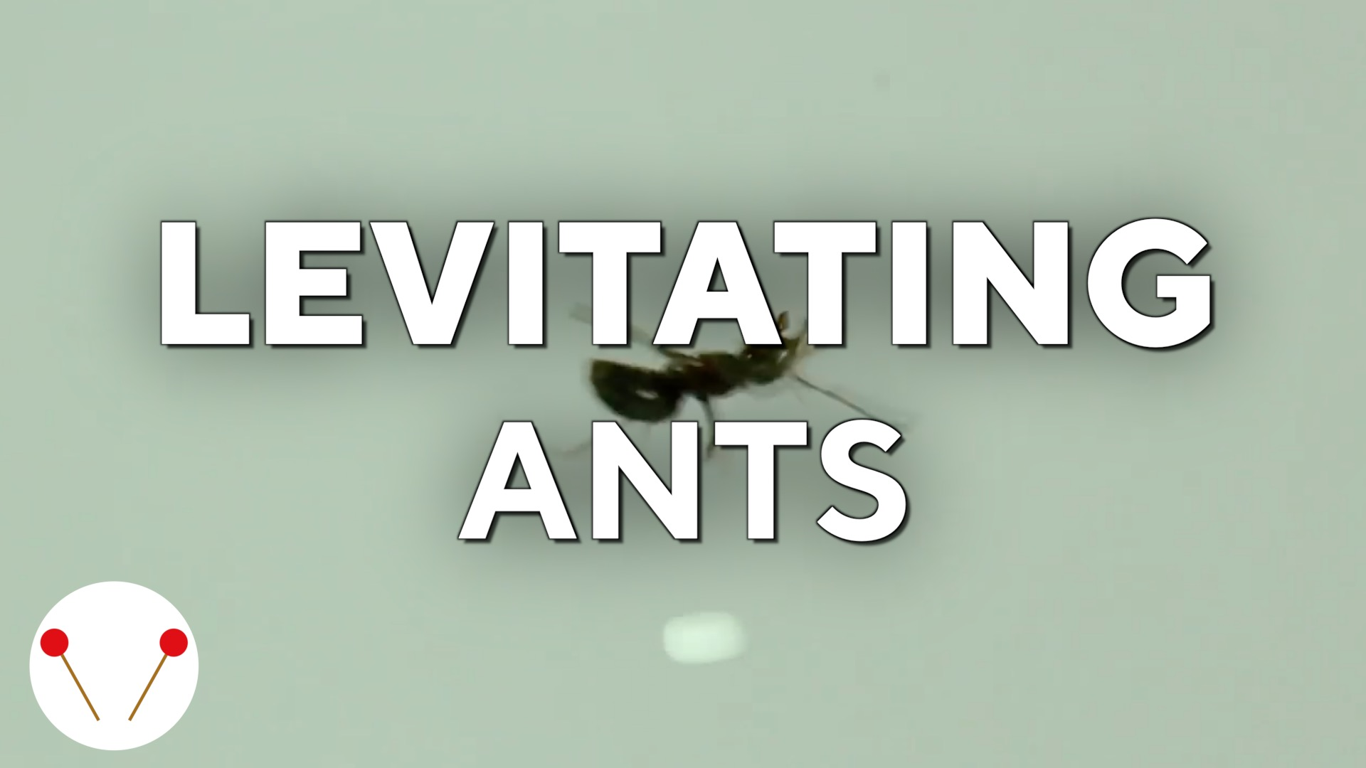 Scientists can levitate ants using acoustic tractor beam
