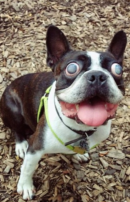 Blind dog with bulging eyes wouldn't stop loving life