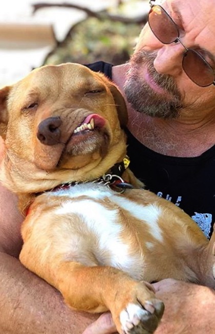 Rejected wonky faced dog finds forever home