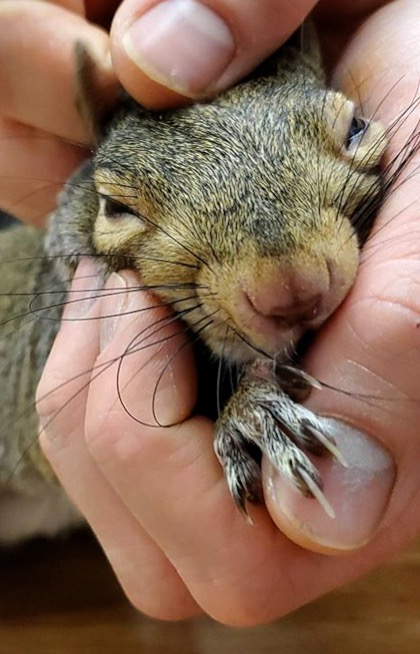 Squirrel paralyzed by hawk attack now living the best life