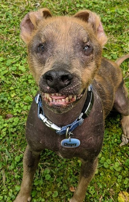 Dog with permanent smile finds forever home